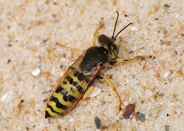 wasp control walnut creek