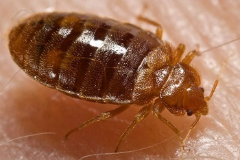 bed bug control walnut creek