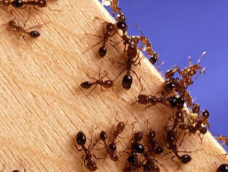 this is an image of ant exterminators near me