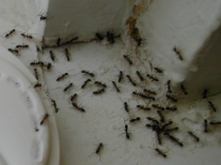 this is an image of pest control near me at pleasant hill, ca